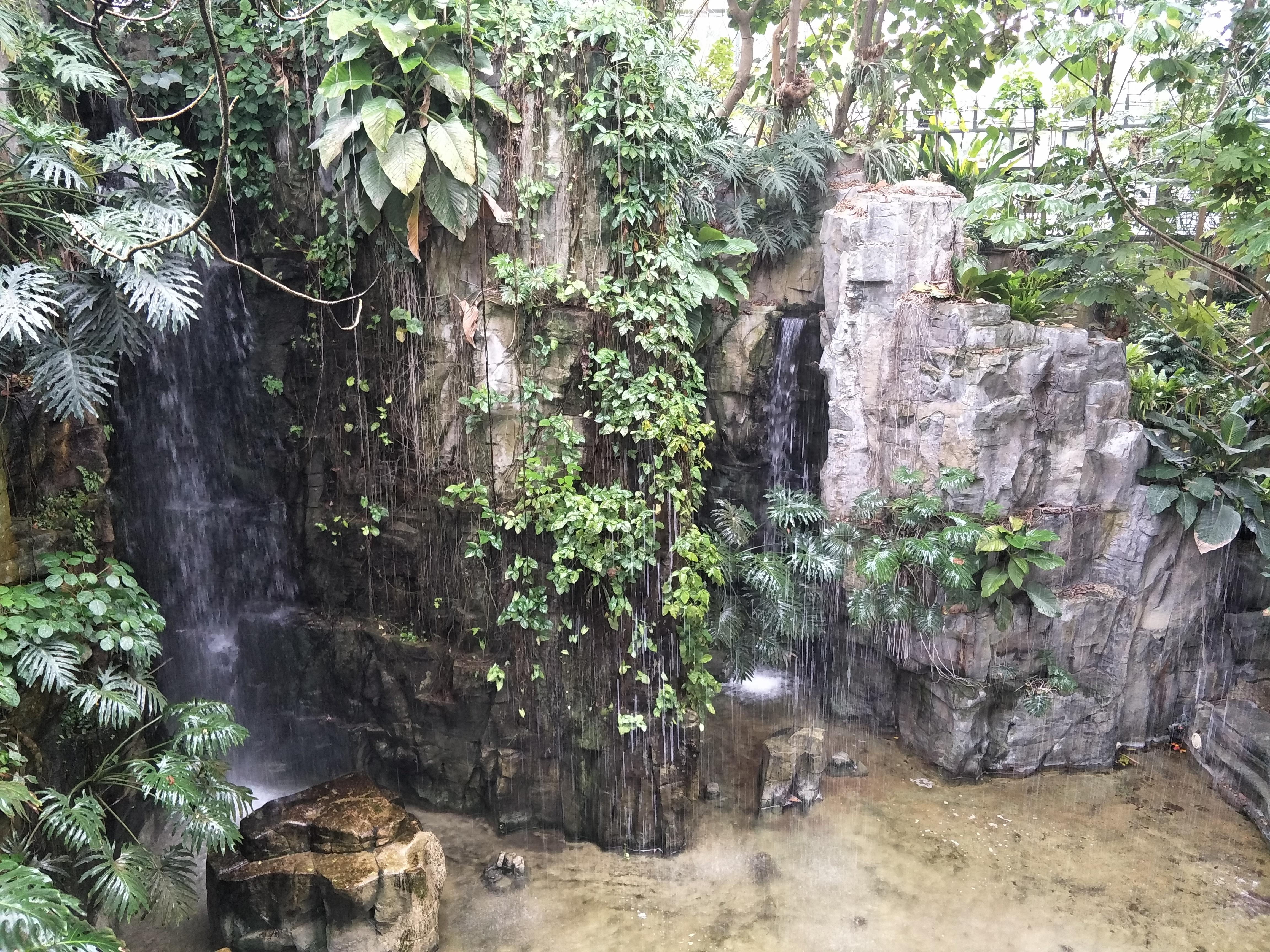 台中科博館熱帶雨林假山
